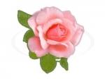 Цветы 104