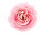 Цветы 109