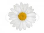 Цветы 112