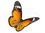 Бабочка 101