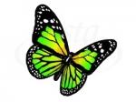 Бабочка 102