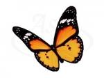 Бабочка 103
