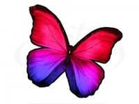 Бабочка 104