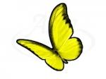 Бабочка 105