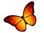 Бабочка 108